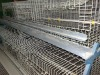Breeding chicken cage(factory price)