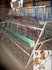 battery poultry layer chicken cage